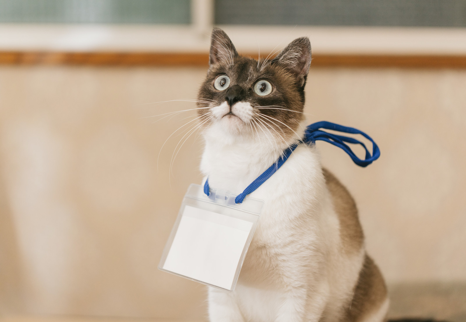 セミナー猫