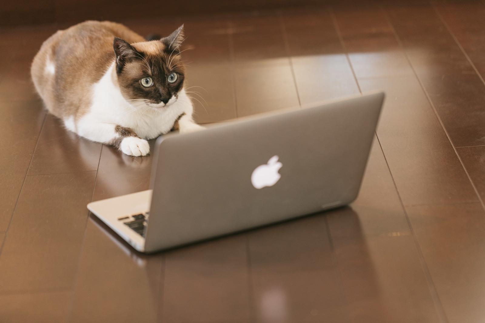 アドセンス審査に挑戦する猫